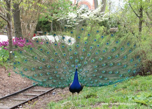 A Trip To The Cincinnati Zoo And Botanical Garden The