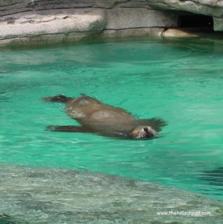 Cincinatti Zoo